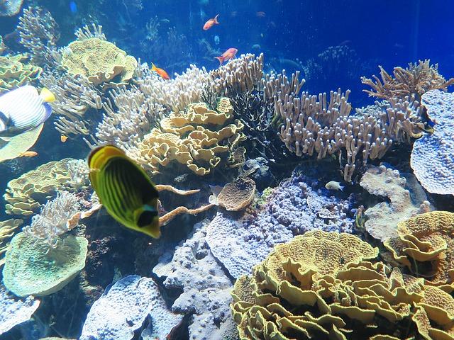 akvárium v Monaku