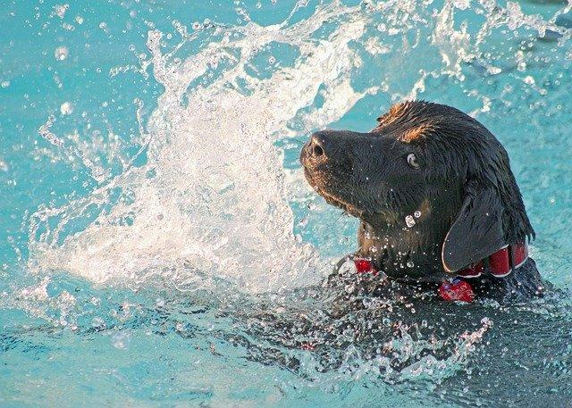 Nepřikrytý bazén může být nebezpečný