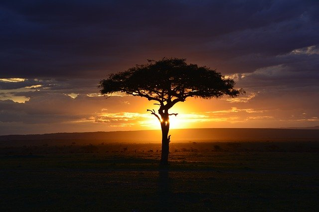 strom a západ slunce